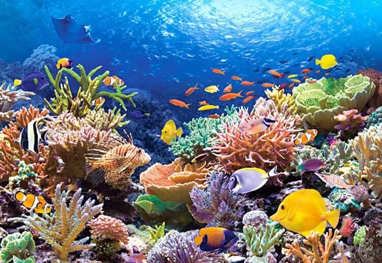در دل اقیانوس چه خبر است