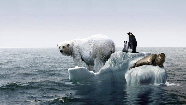 گرمایش زمین هیچ گاه متوقف نشده است؟