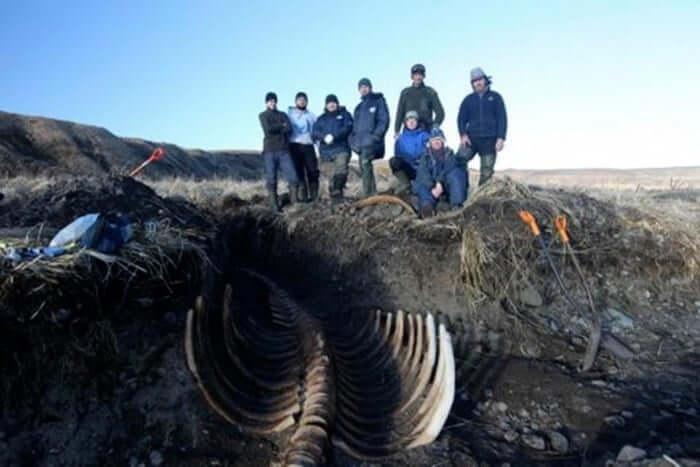 روکیدا | کشف اسکلت عظیم و بدون سر گاو دریایی در سیبری |