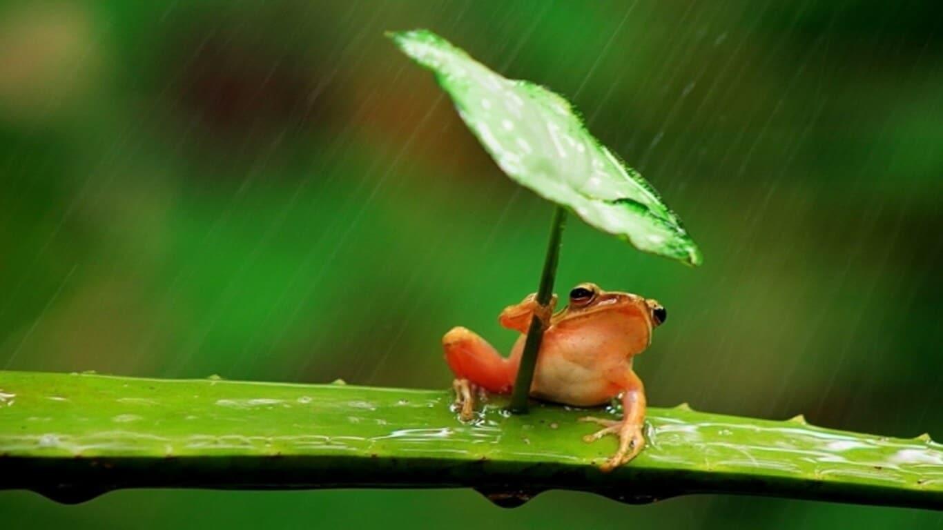 پیش بینی آب و هوا توسط حیوانات