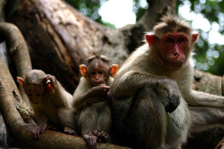 Monkeys in the Wild 28689447