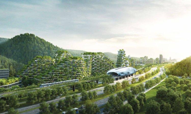 چین برای مبارزه با آلودگی هوا 32400 مایل مربع درخت میکارد