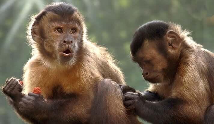 روکیدا | آیا میمون ها و دیگر گونه ها با هم تله پاتی دارند؟ |