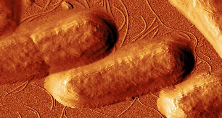 ردیابی 3 بعدی پروت/سین با میکروسکوپ نیروی اتمی