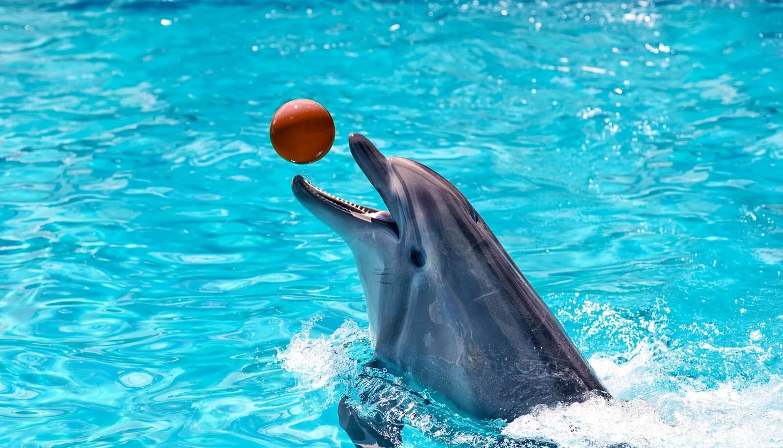 دلفینها و چرت زدن با یکچشم باز