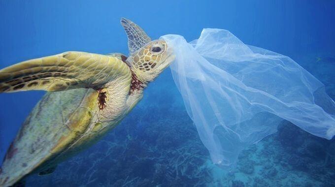 روکیدا - جایگزینهای پلاستیک در کسب و کار، چالش یا فرصت؟ - انرژی پاک, حیوانات, زندگی و استارتاپ, سبک زندگی, محیط زیست, مدیریت استارتاپ, مدیریت کسب و کار