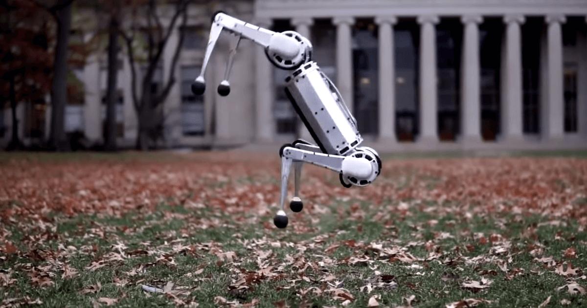 مینی ربات یوزپلنگ پشتک