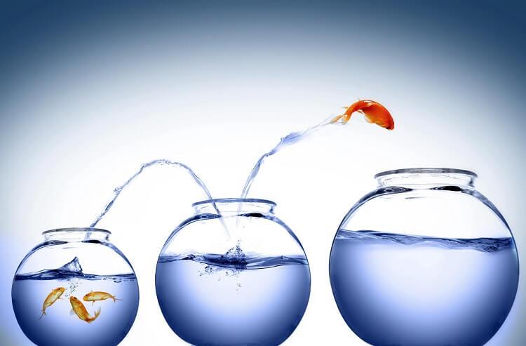 بزرگ کردن و گسترش شرکت