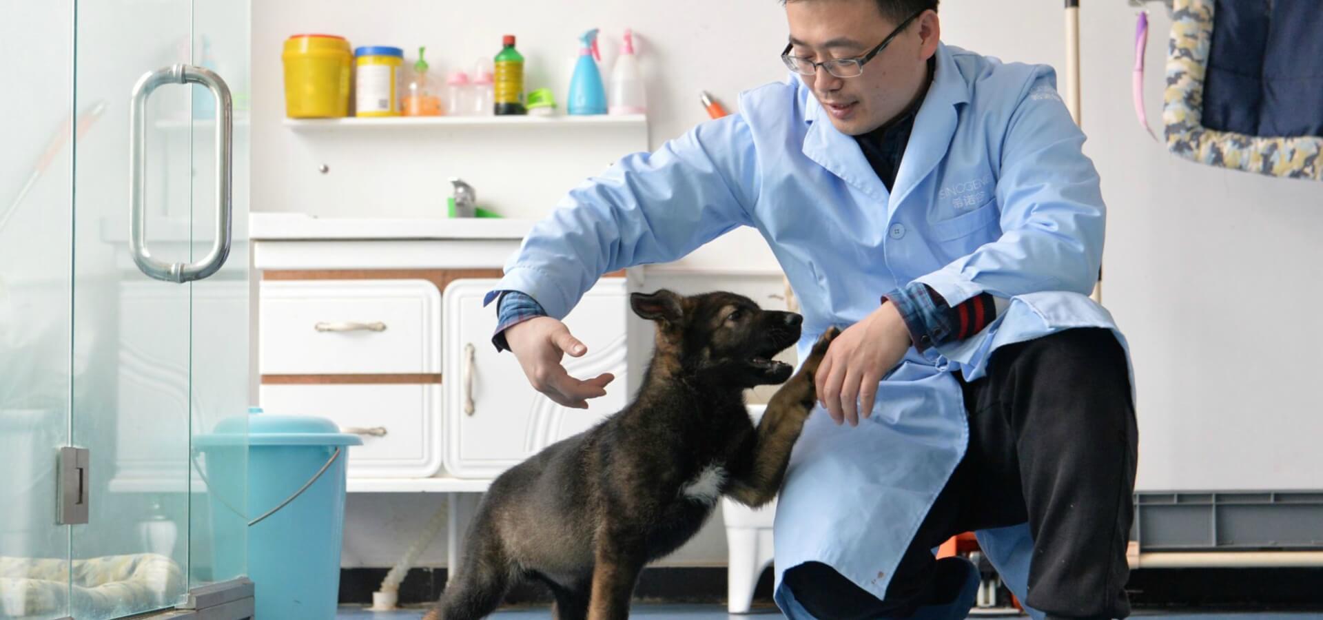 شبیه سازی سگ های پلیس در چین