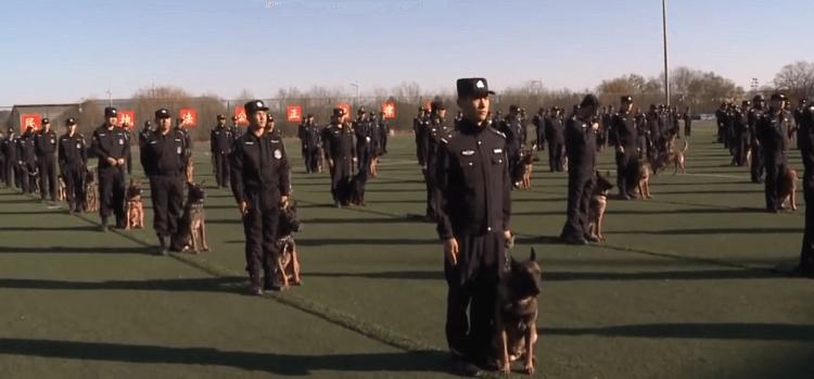 نیروی پلیس با سگ شبیه سازی