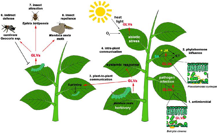 علت بوی گیاهان