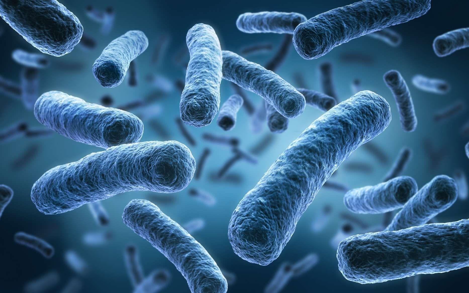 باکتری Veilonella شما را یک قهرمان دو ماراتون میکند!