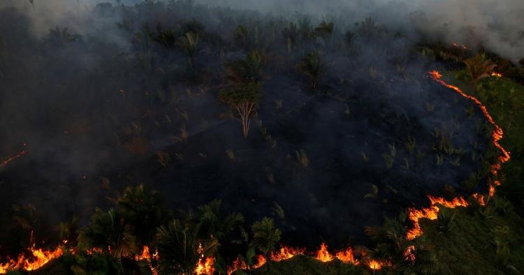 جنگل سوزی آمازون