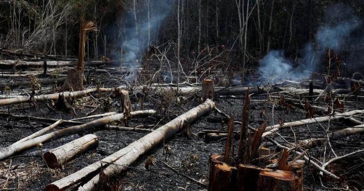 سوختن جنگل آمازون
