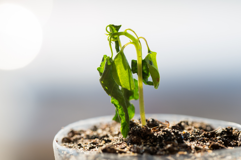کاهش رشد گیاهان
