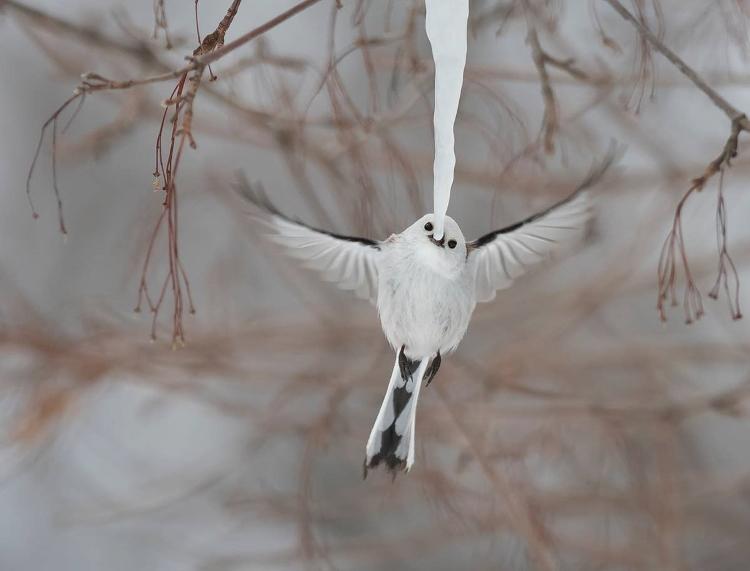 عکاسی از حیات وحش پرنده
