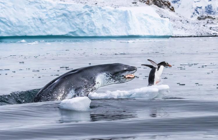 فرار پنگوئین حیات وحش