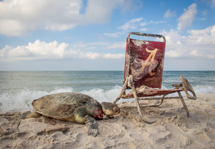 مرگ لاکپشت
