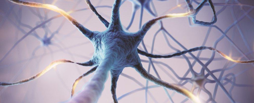 فعالیت بیش از حد مغز ارتباط نزدیکی با عمر کوتاهتر دارد