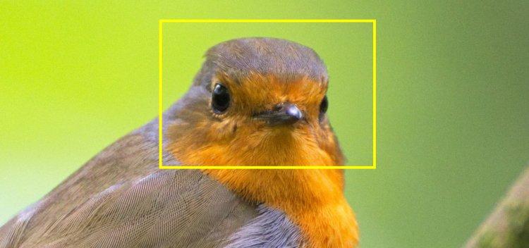 فناوری تشخیص پرنده هوش مصنوعی