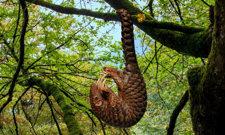 پانگولین درخت