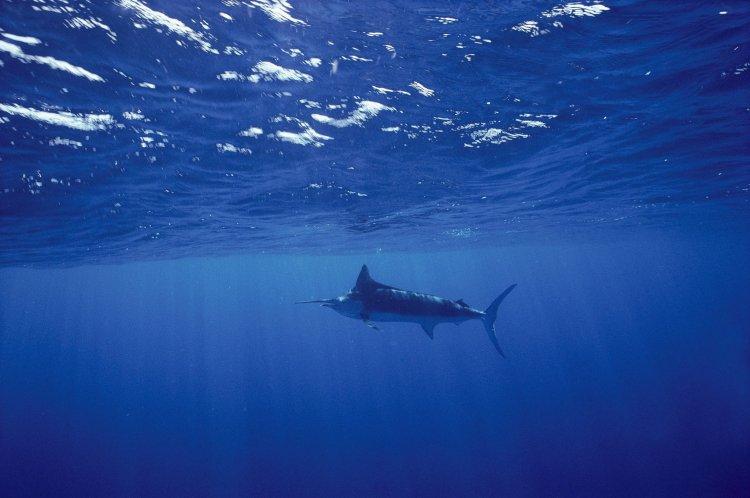 تغییرات آب و هوایی چه تاثیری روی سطح اکسیژن اقیانوسها داشتهاند؟ 1