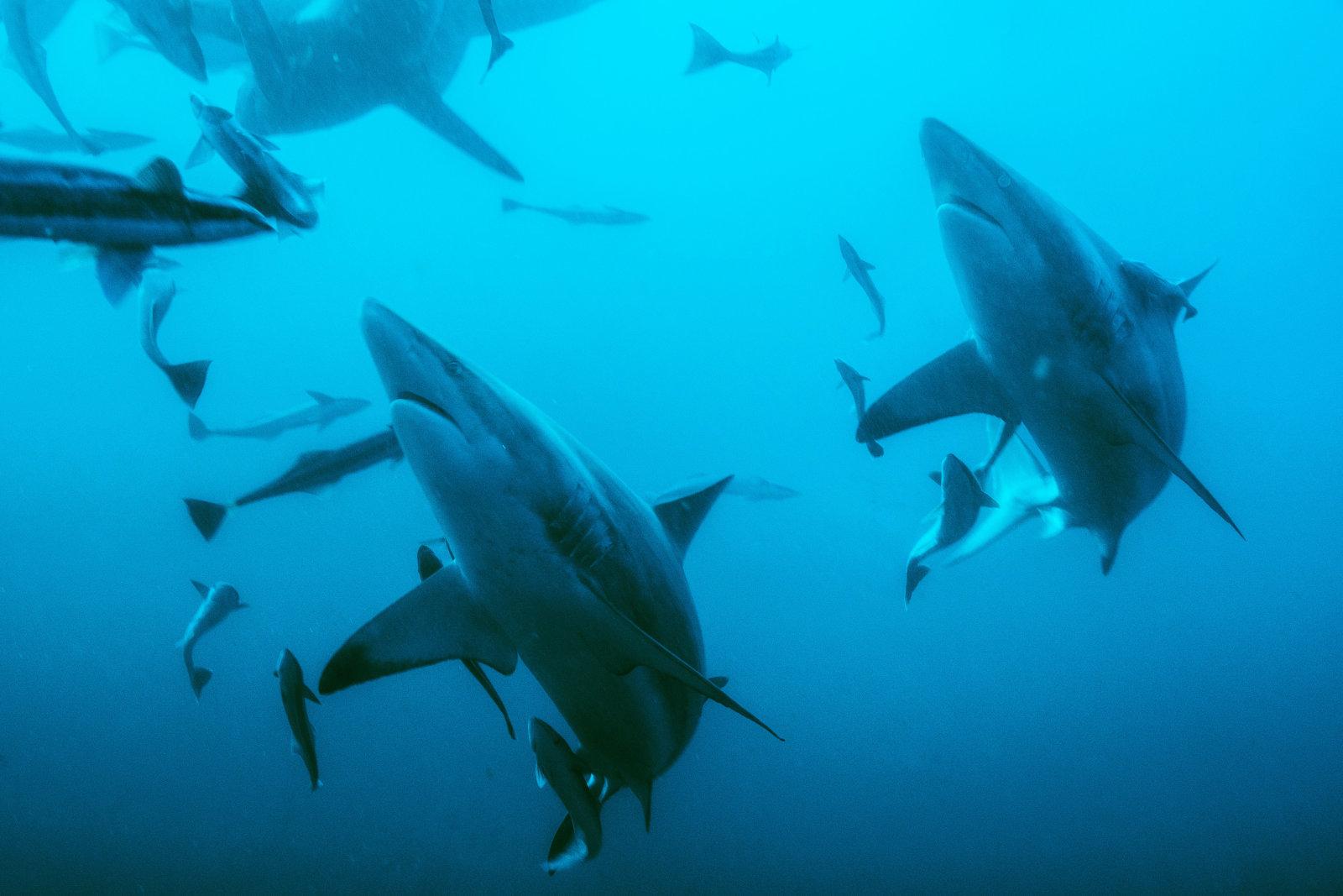 تغییرات آب و هوایی چه تاثیری روی سطح اکسیژن اقیانوسها داشتهاند؟