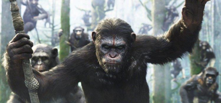 مهارت های رهبری و مدیریت شامپانزه ها