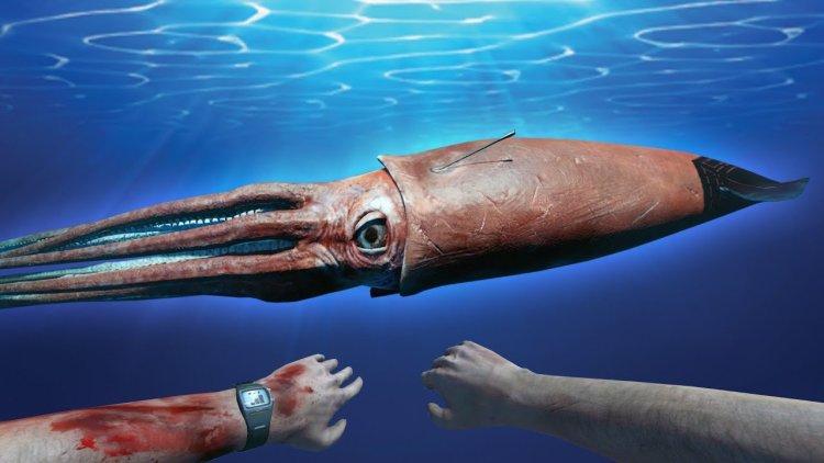 یک ماهی مرکب غولپیکر ترس را به کاوشگر NOAA وارد کرد 1