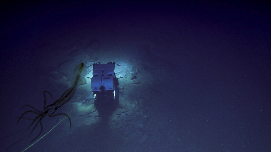 یک ماهی مرکب غولپیکر ترس را به کاوشگر NOAA وارد کرد