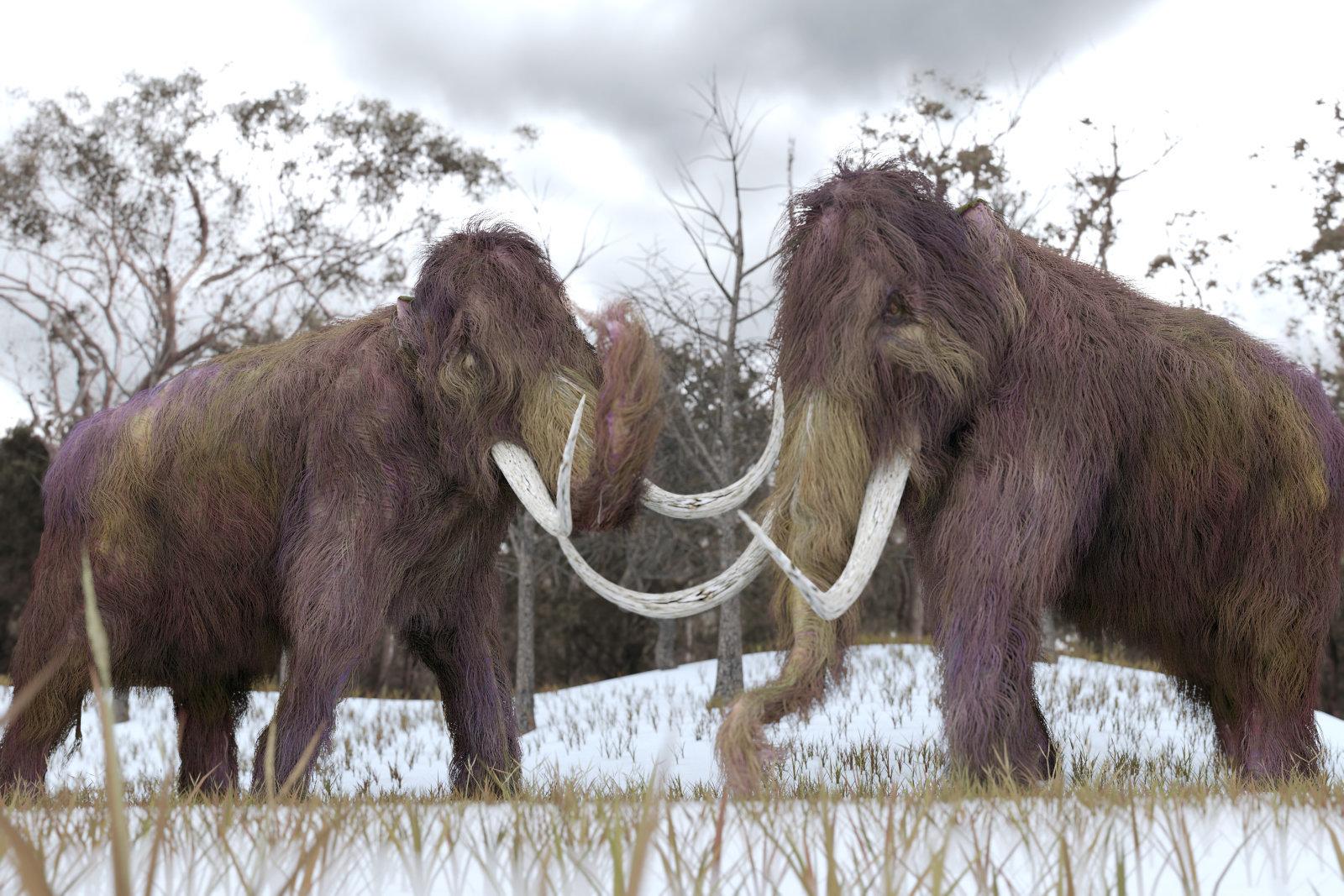 آیا علت انقراض ماموتها مشخص میشود؟