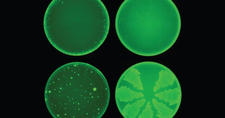 هوش مصنوعی موفق به کشف آنتیبیوتیک شده است؟