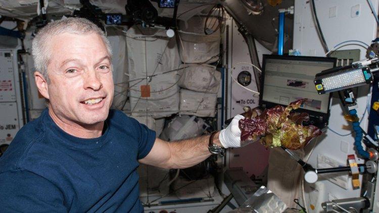 آیا ناسا به کشت گیاهان خوراکی در فضا نزدیکتر شده است؟ 1