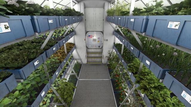 آیا ناسا به کشت گیاهان خوراکی در فضا نزدیکتر شده است؟