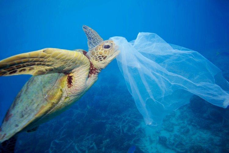 چرا لاکپشتهای دریایی پلاستیکها را میخورند؟ 1 scaled
