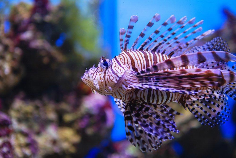 روکیدا | خطرناک ترین موجودات دریایی کدامند؟ | محیط زیست
