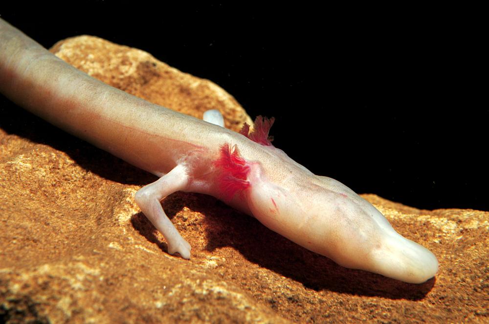روکیدا - با 10 حیوان عجیب آشنا شوید که می توانند ماه ها بدون غذا زندگی کنند - حیوانات, محیط زیست