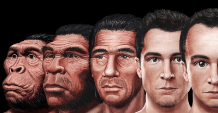 Evolution of the human face 780x405 1