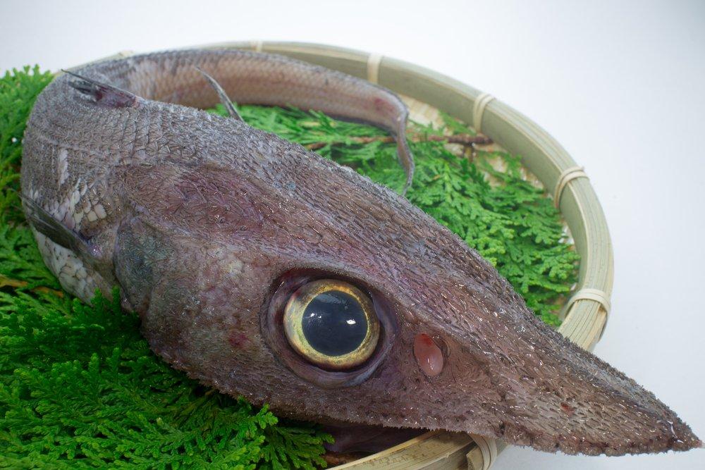 روکیدا | با 10 تا از عجیب ترین موجودات در اعماق دریا آشنا شوید |
