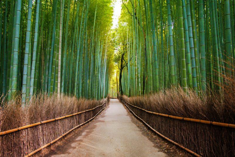 روکیدا - 10 مکان بسیار زیبا که به بهشت روی زمین می مانند - طبیعت, محیط زیست