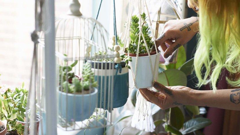 روکیدا | برای داشتن هوای پاک در خانه، به چند گیاه خانگی نیاز داریم؟ | اطلاعات عمومی, زندگی, زندگی سالم, سبک زندگی, مدیریت زندگی
