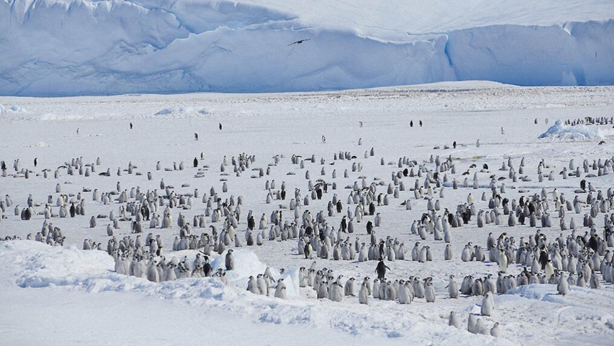 200717 Antarctica 1