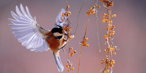 bird flying 1