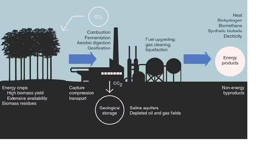ذخیره کربن